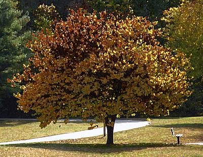 Fall Leaves Print by Steven  Michael