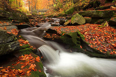 Fall Power Print by Evgeni Dinev
