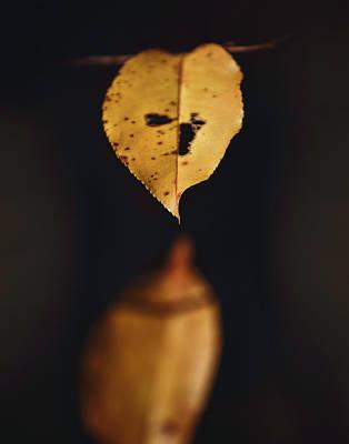 Fall Reflections Original by Eduard Moldoveanu