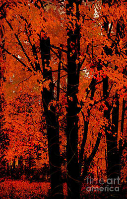 Fall Splendor, Firey Orange Fall Leaves Print by Tina Lavoie