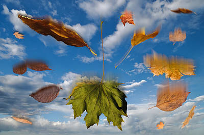 Composite Digital Art - Fall by Steve Gadomski