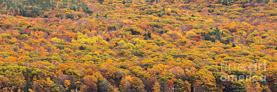Fall Photograph - Fall Trees Over Glen Lake by Twenty Two North Photography