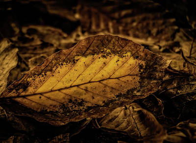 Photograph - Fallen Color by Odd Jeppesen