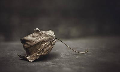 Contemplative Photograph - Fallen Leaf by Scott Norris