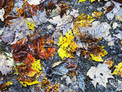 Rainy Day Photograph - Fallen Leaves Rainy Day by Thomas R Fletcher
