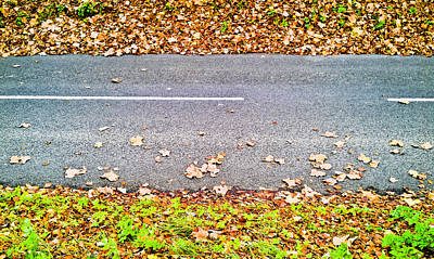 Ideal Photograph - Fallen Leaves by Tom Gowanlock