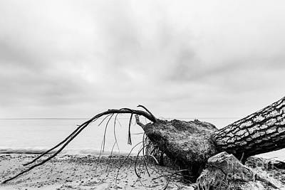 Winter Photograph - Fallen Tree On The Beach After Storm by Michal Bednarek