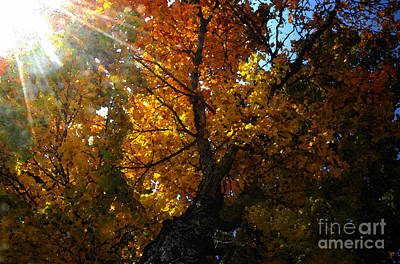 Sun Rays Digital Art - Falling Light by David Lee Thompson