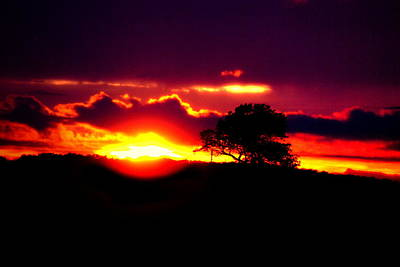 Tree Photograph - Falling Sunset by Emily Stauring