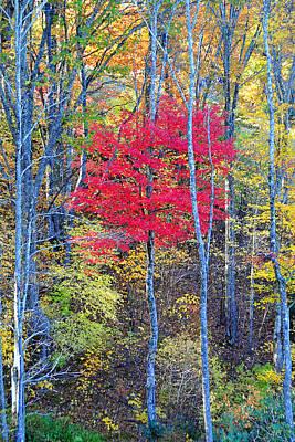 Fall's Flame Original by Alan Lenk