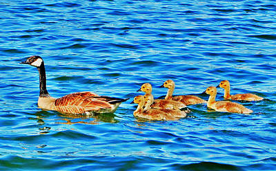 Water Photograph - Family Outing by Emily Stauring