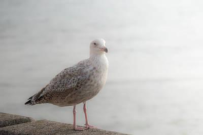 Sea Gull Photograph - Farewell by Wim Lanclus