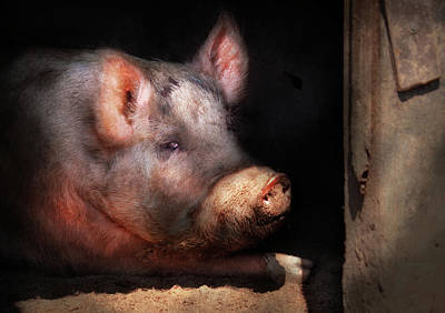 Wild Hogs Photograph - Farm - Pig - Piggy Number Two by Mike Savad