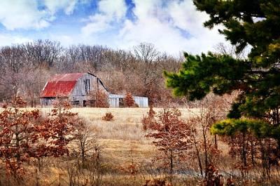 Photograph - Farm Life by Marty Koch