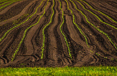 Green And Brown Photograph - Farming Lines by Karol Livote