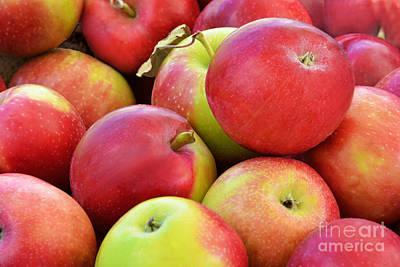Farmstand  Fresh-picked  Apples Print by Regina Geoghan