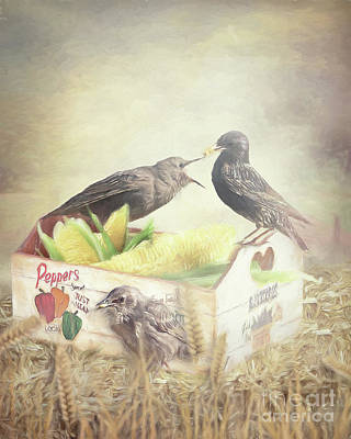 Starlings Mixed Media - Farmstand Starlings by Ulanawa Foote