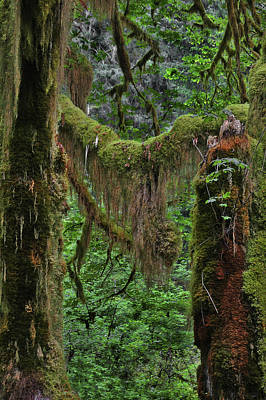 Lichen Photograph - Fascinating Hoh Valley - Hoh Rain Forest Olympic National Park Onp Wa Usa by Christine Till