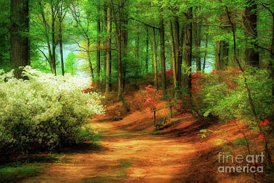 Benches Digital Art - Favorite Path by Lois Bryan