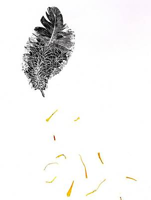 Falling Drawing - Feather by Bella Larsson