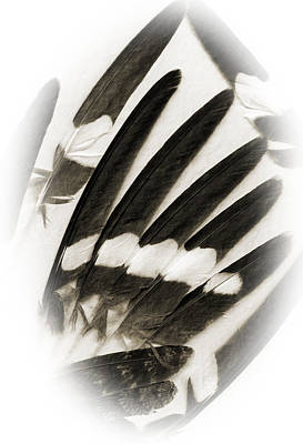 Feathers Print by Fred Lassmann