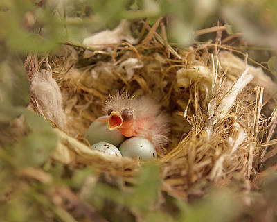 House Finch Photograph - Feed Me by Heather Applegate