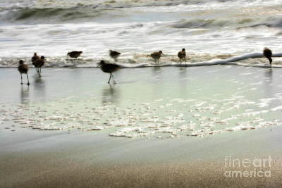 Beach Theme Decorating Photograph - Plundering Plover Series 2 by Angela Rath