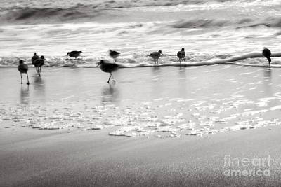 Plundering Plover Series In Black And White Print by Angela Rath