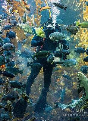 Feeding Time At The Monterey Bay Aquarium Print by Jerry Fornarotto