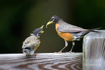 Feeding Time Original by Jim  Calarese