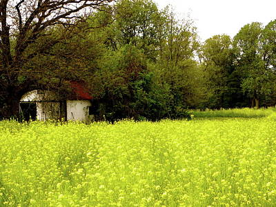 Field In Bloom Print by Bradley Smith