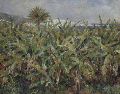 Banana Tree Painting - Field Of Banana Trees  by Auguste Renoir