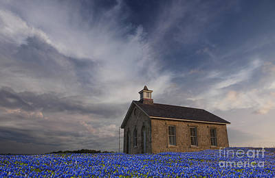 Field Of Blue Bonnets Print by Keith Kapple