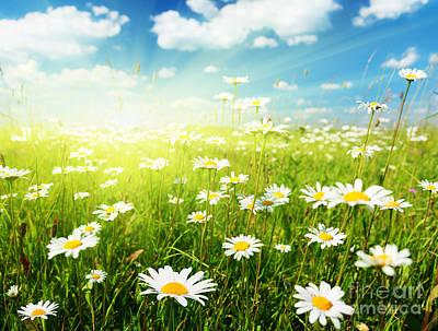 Sources Digital Art - Field Of Daisy Flowers by Caio Caldas