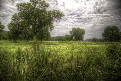 Wildlife Photograph - Field Of Dreams By Darrell Hutto by J Darrell Hutto