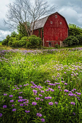 Mennonite Photograph - Field Of Flowers by Debra and Dave Vanderlaan