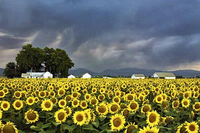 Field Of Flowers  Original by James Steele