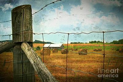 Field Of Freshly Cut Bales Of Hay Print by Sandra Cunningham