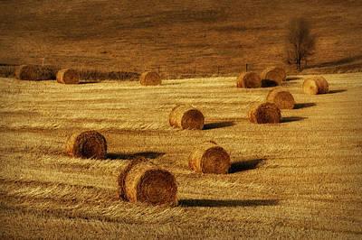 Field Of Gold #1 Print by Nikolyn McDonald