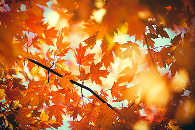 Fall Photograph - Field Of Orange by Todd Klassy