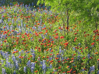 Wildflowers Photograph - Field Of Wildflowers by Rebecca Shupp