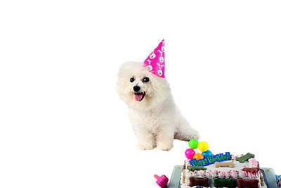 Fifi Loves Birthdays Print by Michael Ledray