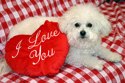 Warm Fuzzy Puppy Photograph - Fifi Loves You by Michael Ledray