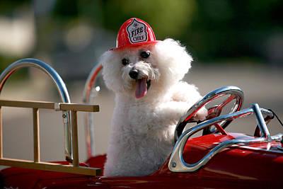 Fifi The Fire Dog Print by Michael Ledray