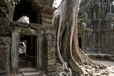 Plant Physiology Photograph - Fig Tree Growing Over Crumbling Ruins by Rebecca Hale