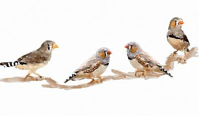 Finch Painting - Finches by Chris Butler