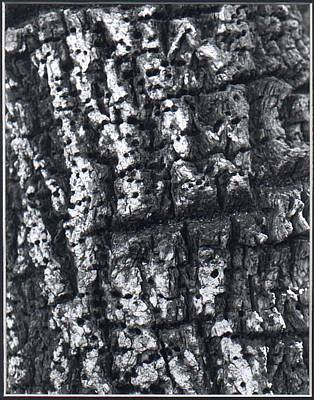 Photograph - Find The Faces In The Bark by Valerie X Armstrong