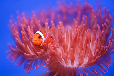 Nemo Photograph - Finding Nemo by Wendy