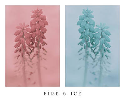 Flower Photograph - Fire And Ice by Greg Collins