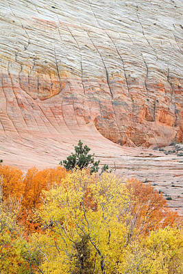 Autumn Photograph - fire foliage at Checkerboard mesa in Zion National park by Pierre Leclerc Photography